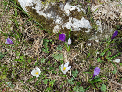 buvette-chatel-fleurs-1