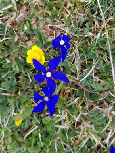 buvette-chatel-fleurs-4